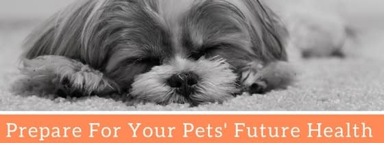 best pet health insurance